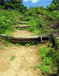 Logs, called water bars, cross a steep part of hiking trail, creating steps and stopping erosion.